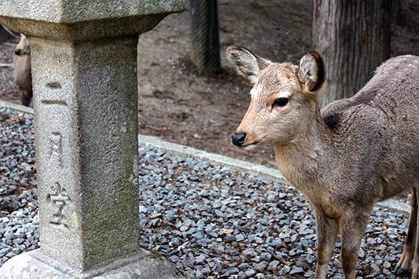 Omizutori Nara