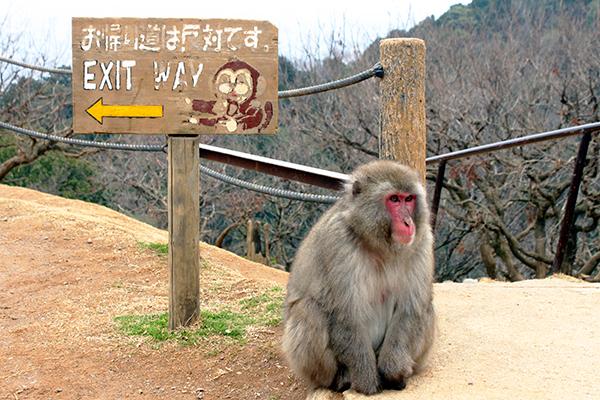 Arashiyama Monkey Park in Kyoto